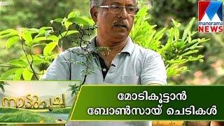 Bonsai plant Making | Nattupacha | Manorama News