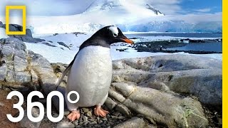 360° Antarctica - Journey Through The Ice | National Geographic
