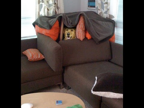 When you need to build a pillow fort