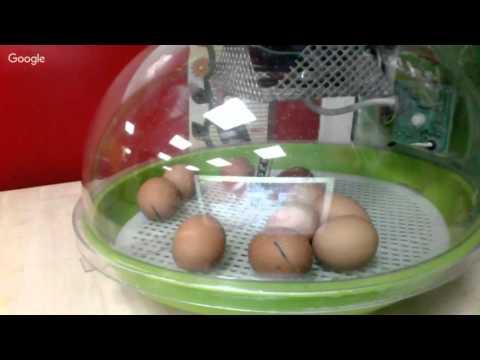 Shaw Wood eggs