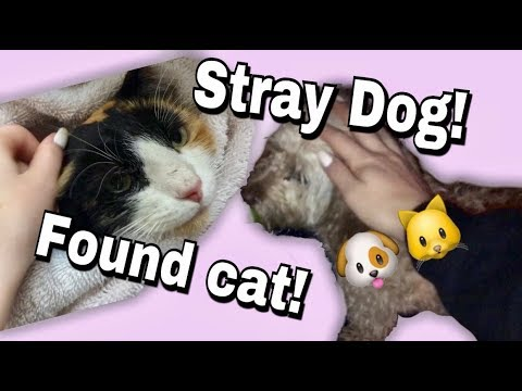 I found a stray dog/finding a lost cat! (vlog 19)