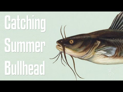 Catching Bullhead in a Small Pond (Summer)