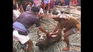 Torajan Funeral - an amazing spectacle!