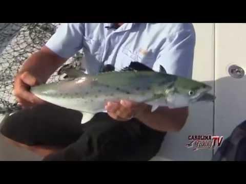 Carolina Fishing TV - Season 3/6 - Spanish Mackerel 101