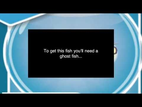 How to Breed the Ruby Fish in Fish With Attitude