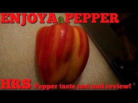 Enjoya or Striped Holland Bell Pepper, Capsicum annuum, review 2018
