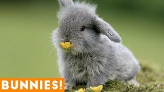 Funniest Rabbit Videos Weekly Compilation 2018   Funny Pet Videos
