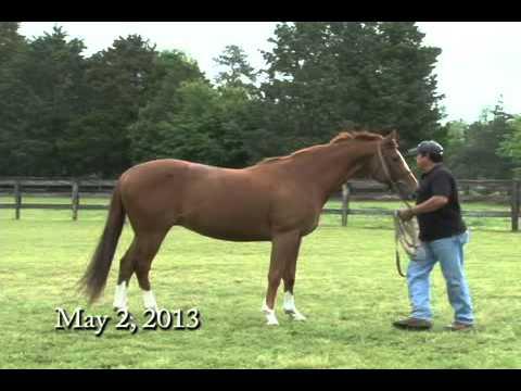 The Bartonella Horse