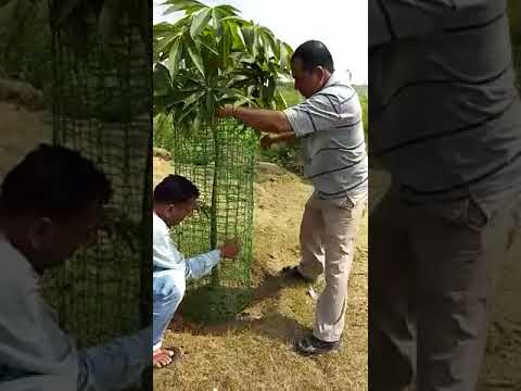 Manufacturer of Tree Guard