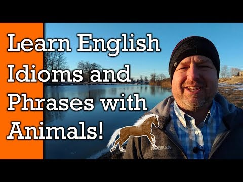 Animal Idioms!  Learn English Idioms, Phrases and  Expressions with Animals