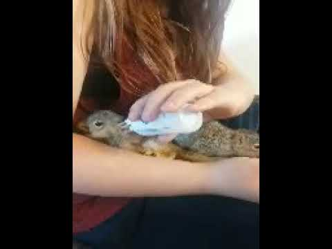 My granddaughter feeding Orphaned baby squirrels
