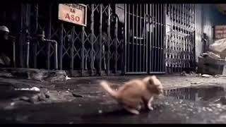 #x202b;فديو قصير يجعلك تعيش 30 ثانيه من حياتك قطه بلشارع#x202c;lrm;