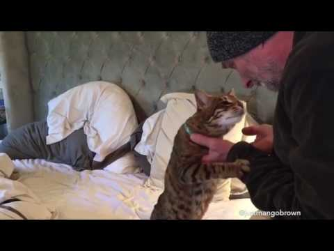 Adorable Blind Cat can only recognize owner by scent
