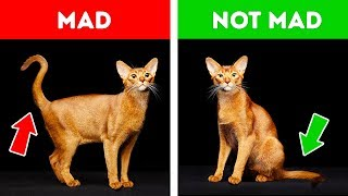 How Cats Say