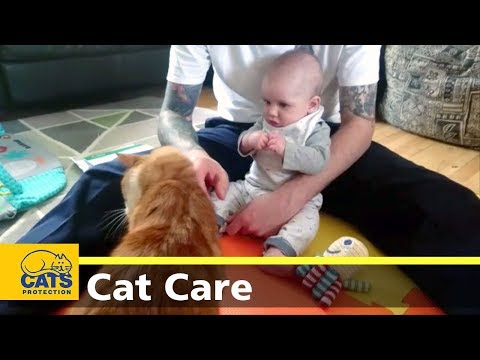 Cats and babies - Cats Protection's Kids and Kitties