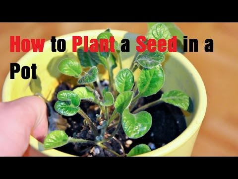 How to Plant a Seed in a Pot