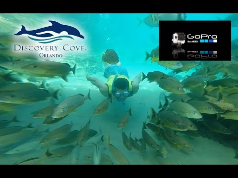 Discovery Cove Snorkeling with the GoPro Hero3 (tropical fish, stingrays, exotic birds, sharks)