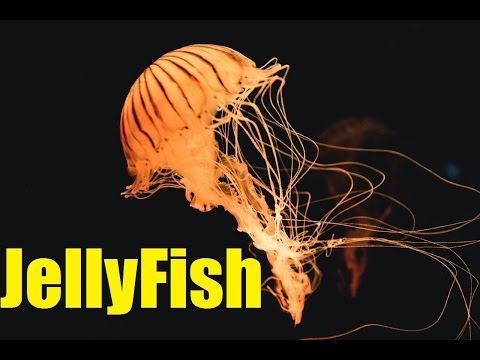 Top 10 AMAZING Facts about Jellyfish   Jellyfish Sting   2017   TheCoolFactShow EP17