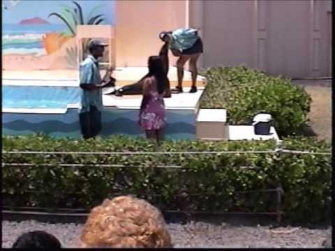Sea Lion Tricks at Sea Life Park Oahu Hawaii Dolphon Cove Hawaiian Ocean Theater Penguin Review