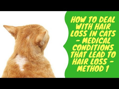 How to Deal with Hair Loss in Cats - Medical Conditions that Lead to Hair Loss - Method 1
