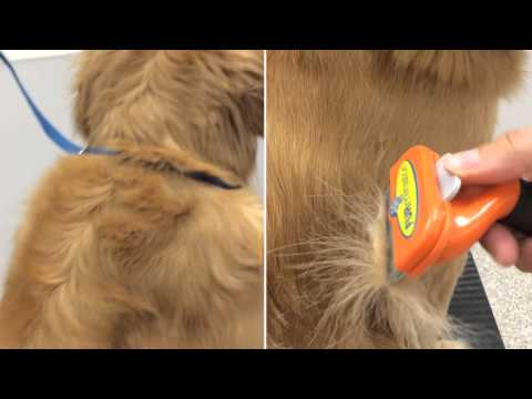 furminator de shedding tool for dogs , video of how it works on your pet