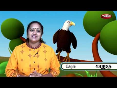 Learn names of Birds in Tamil   Learning Birds   Learn Birds Names For Kids