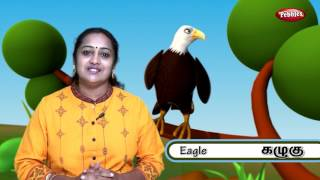 Egret - Birds In Tamil - Pre School Animated /Cartoon Educational