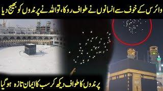 Birds Doing Tawaf Around Khana-e-Kaaba   Insano Nay Tawaf Roka To Prinday Agaye