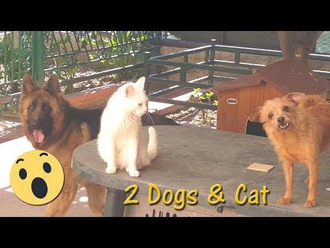 Awww! 🐈 🐶 (It's my sis. Not my dogs/cat)