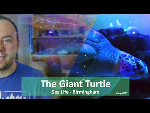 The Giant Turtle | Sea Life Birmingham | and my New Years Resolution 2017 | Vlog 1