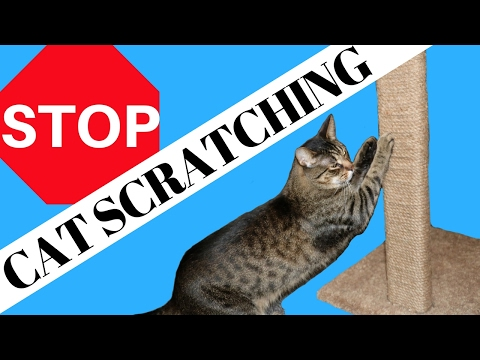 HOW TO GET YOUR CAT TO STOP SCRATCHING THE FURNITURE