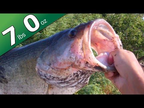 BIG BASS - 7 lbs - California Swim Jig