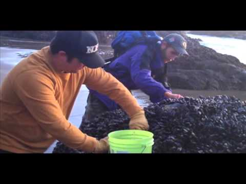 HowTo   Mussel Hunt