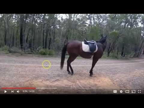 Girl Falls Off Horse & Cries - Non Horse Person Finds Horse & Leads Home