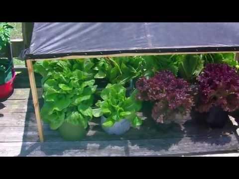 Grow Lettuce (2015) DIY Heat Resistant Sun Shade