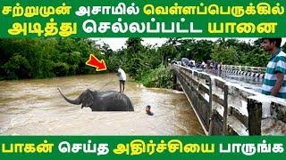 சற்றுமுன் அசாமில் வெள்ளப்பெருக்கில் அடித்து செல்லப்பட்ட யானை அதிர்ச்சியை பாருங்க Tamil News | Viral