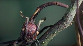 Attack of the killer fungi | Planet Earth | BBC