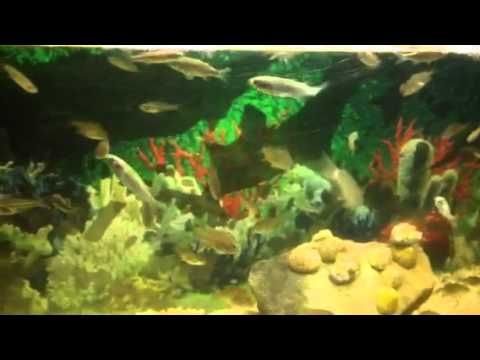 Saltwater bait tank