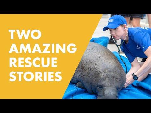 A Double Return For The SeaWorld Rescue Team   SeaWorld®