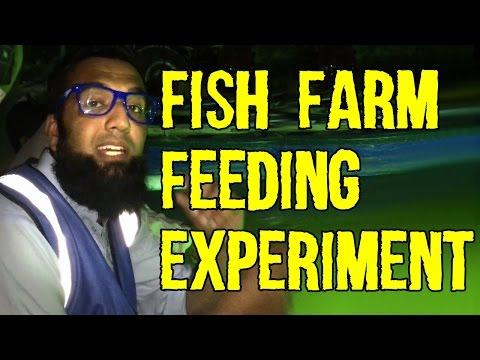 Very Successful Fish Farm Feeding Experiment | Azad Chaiwala Show