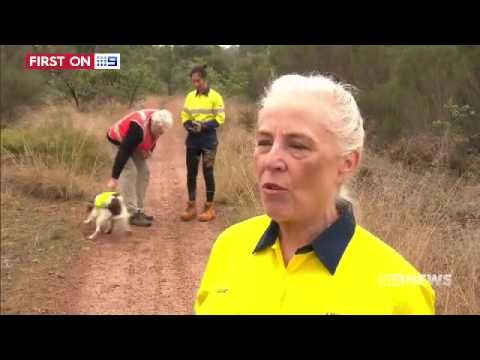 Another Detection Dog First For Australia