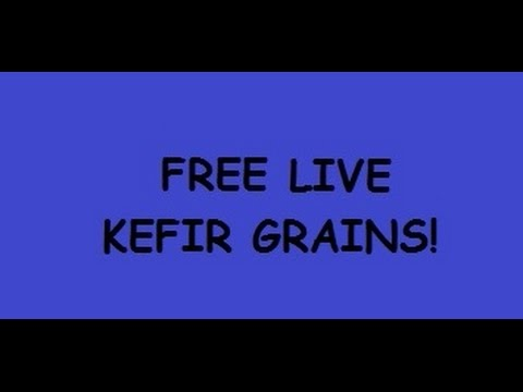 Free Kefir Grains! Probiotics! SCOBY!  Hurry!  Last Chance!