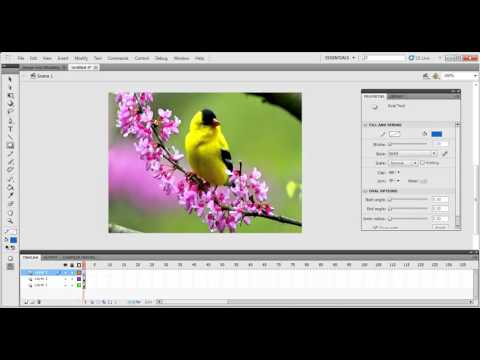 HOW TO CREAT IMAGE OVER MASKING IN ADOBE FLASH PROFESSIONAL PRO Cs5.