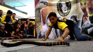 INDONESIA COBRA SHOW @MALL WTC MATAHARI SERPONG  #boiga