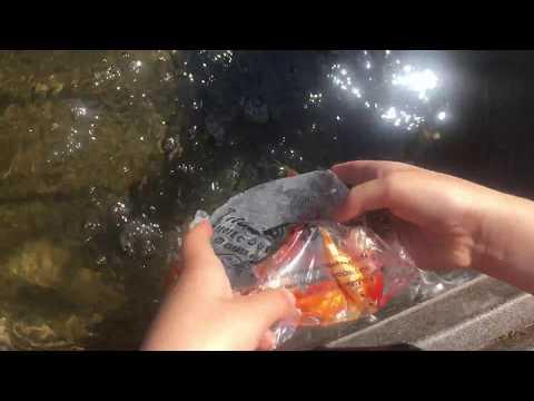 Goldfish and Stock Tanks