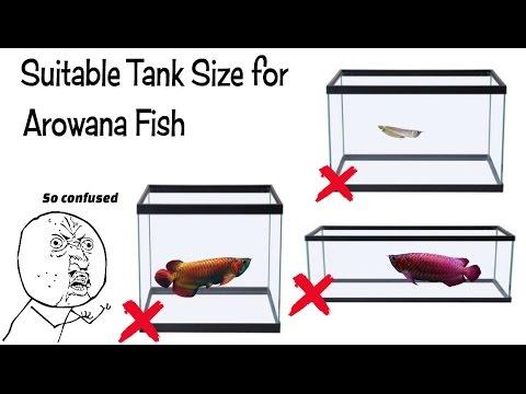 Best Tank Size For Arowana Fish