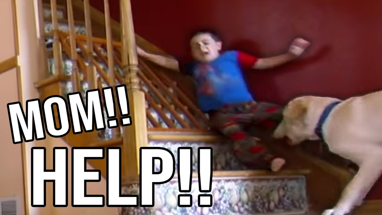 Family Dog Drags Kids Around The House