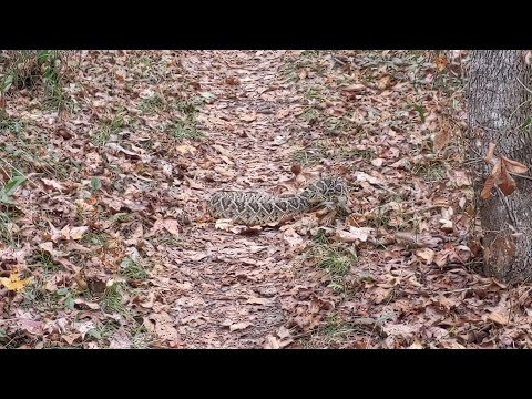 VLOG #54 - Another Snake Encounter