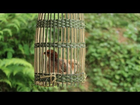Primitive technology: How to make bird cage with bamboo