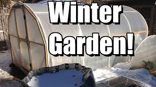 Top 6 Tips For Your First Winter Vegetable Garden! ❄️❄️❄️